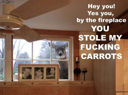 funny deer pictures. Deer Looking in Window- Funny